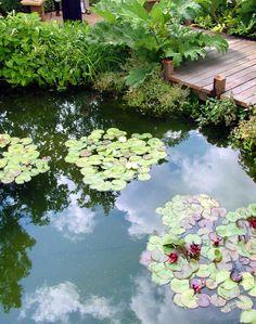 Plants for the koi pond