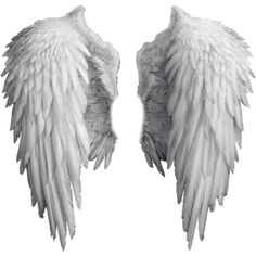 Wings ❤ liked on Polyvore featuring wings, fillers, backgrounds, accessories, random, text, quotes, phrase and saying