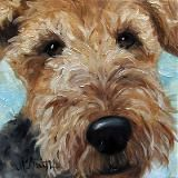 Airedale or Welsh Terrier they are both adorable!
