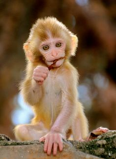 Zoo Animals, Cute Baby Animals, Types Of Monkeys, Wild Animals Photos, Pet Monkey, Animal Rescue Site, Young Animal, Primates, Animal Memes