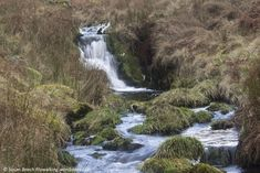 A short but quite tough walk to a little frequented Ochils glen. Like many of the Ochils glens, Balquharn is steep sided, wooded and has its own waterfall. A small reservoir is also to be found nes…