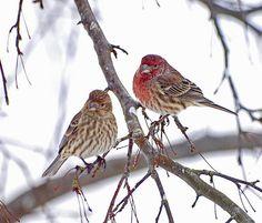 Love Birds | Flickr - Photo Sharing!