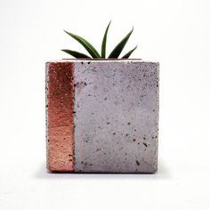 Mini concrete planters for cactus and succulents made in our own workshop. Find out more:
