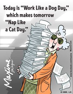"Today is ""Work like a Dog Day,"". Which means tomorrow is ""Sleep like a Cat Day"""