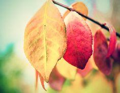 "Autumn Leaf Fine Art Photography Print | ""Seasons 1"" by Shannon Howard Photography"