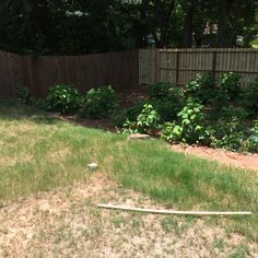 Another photo of our backyard. Full of weeds and a strange slope going on here. Needs some Scott brother love!! #PinMyDreamBackyard