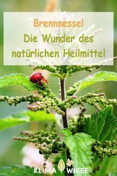 Kraut, Herbs, Tier, Wellness, Sport, Food, Nettle Recipes, Vegan Life, Deporte