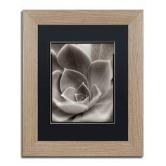 "Trademark Art 'Florison XXV' Framed Photographic Print Frame Color: Birch, Mat Color: White, Size: 20"" H x 16"" W x 0.5"" D"