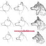Kurt köpeği resmi çizimi