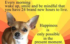 Motivational pup