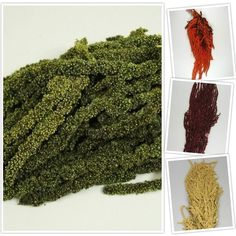 Amarantus Caudatus - DepoDecorFloral Shag Rug, Rugs, Home Decor, Green, Plant, Shaggy Rug, Homemade Home Decor, Types Of Rugs, Carpet