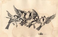 bird_flying_study_by_noiaillustration-d6u871d.jpg 1.024×669 Pixel
