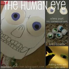 learning about the human eye - Apologia Anatomy for Young Explorers #homeschool
