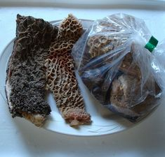 The benefits of raw green tripe for dogs! - K9 Instinct - Dog Nutritionist in Kitchener, Ontario, Canada. K9 Instinct Blog! Dog Nutrition consultations online!