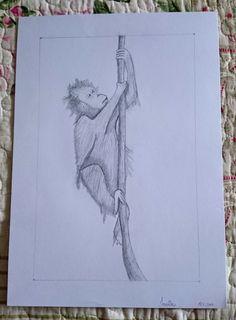 Orangutan, monkey, nature drawing