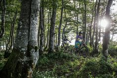Forest ride. Cycling, Plants, Beauty, Biking, Flora, Cosmetology, Bicycling, Plant, Ride A Bike