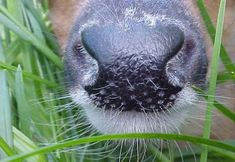 Deer Facts - Whitetail Deer Hunting--Great List of stuff   Very interesting