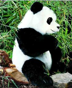 Kosen 3460 Large panda Sitting