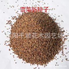 Wholesale quality vegetable seeds seeds nine birds Pickled Pickled mustard seed Brassica juncea salty rapeseed 200g/lot