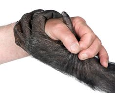 http://www.soulcare.org/images/chimp_human_hands.jpg
