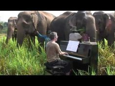 Playing Piano For Injured Elephants Pianist Paul Barton has a real passion for elephants. He took a piano up to the mountains of Kanchanaburi in Thailand. (I'm not sure how in the world he got the piano up there! Elephant Walk, Elephant Love, Herd Of Elephants, Giraffes, Animal Tails, Thailand Elephants, Elephants Never Forget, Playing Piano, Could Play