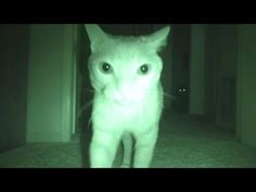 6 Creepy Videos of Cats Seeing Ghosts Recorded on Video - YouTube