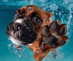 Dog swimming under water from Megan Perry