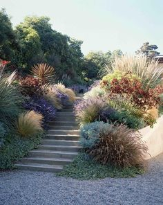 colourful mix of plants, gravel, Mediterranean style city garden, design by Elysian Landscapes (Step Design Exterior) Plantas Indoor, Garden Stairs, Coastal Gardens, Xeriscaping, Landscape Designs, Ornamental Grasses, Backyard Landscaping, Landscaping Ideas, Landscaping With Grasses