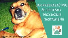 JAK PRZEKAZAĆ PSU, ŻE JESTEŚMY PRZYJAŹNIE NASTAWIENI? http://instrukcjadopsa.blogspot.com/2015/06/jak-przekazac-psu-ze-jestesmy.html