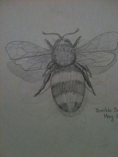 Bumblebee sketch in pencil By Jeanne Tyrrell
