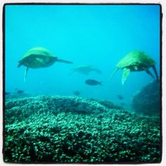 Scuba diving in turtle bay. Kauai, Hawaii... Hope I get to go back some day to do this!