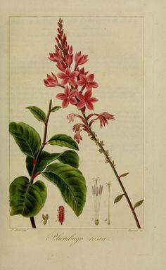 Dessins de belles fleurs | Photos Images Fleurs et Jardins
