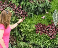 Living walls and Vertical Gardens, LOVES! I would love a garden like the one in…