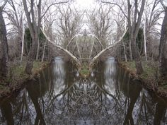 """Distant view of previous uploaded image of """"Pan"""" pareidolia at Sagging Sycamore of Little Chico Creek. Also as  previous..."""