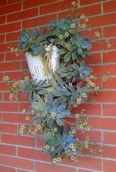 Graptopetalum paraguayense - Ghost Plant in flower: