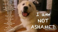 Dog Shaming - Millie the moocher