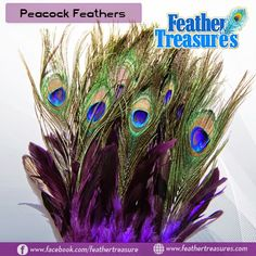 """Peacock Eye Feathers Dyed 30-40"""" – 100 pieces"""