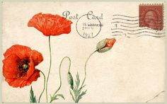 CraftyCrocs Card Shop - Poppies, flower of remembrance.