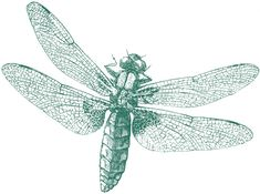 Royalty Free Images Dragonfly | The Graphics Fairy