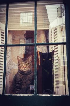 "hellowindowcat: "" South Philly window cats """
