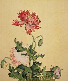 Peony flower by Giuseppe Castiglione