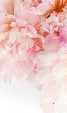 Images Instagram, Story Instagram, Flower Wallpaper, Wallpaper Backgrounds, Iphone Wallpaper, Love Flowers, Beautiful Flowers, Aesthetic Wallpapers, Cute Wallpapers