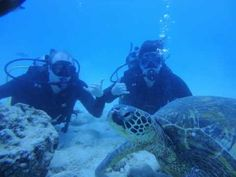 PADI scuba certification, Dive lessons! http://rainbowscuba.com/padi-certification-hawaii.html