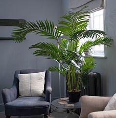 46gbp (120cm), 70gbp (140cm) Living Room Plants, Fake Plants, Traditional Looks, Green Trees, Lush Green, Palm Trees, Plant Leaves, Paradise, New Homes