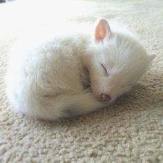 The Internet's Cutest Snow-White Fox Is Growing Up