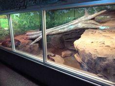 Reptile House - Burmese + Reticulated Python Exhibit