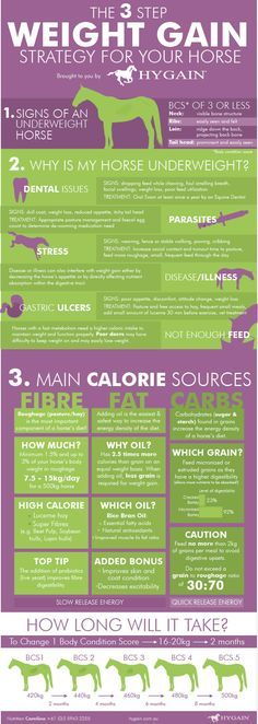 **FREE Horse health fact sheet** Many of our horses unfortunately struggle to…