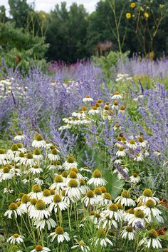 Lavender and echinacea- so simple, so pretty. Now where do you get white echinacea?