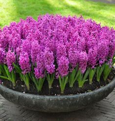 Home And Garden, Vegetables, Purple, Green, Flowers, Plants, Decoration, House, Decorating