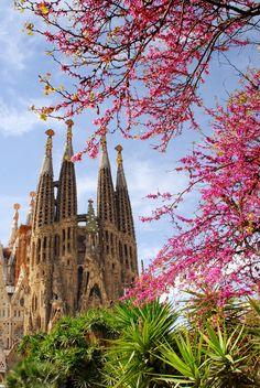 #Barcellona in primavera l'avete mai vista? Prendi al volo l'offerta last minute e sei già lì! http://www.volagratis.com/offerte/voli/Parigi